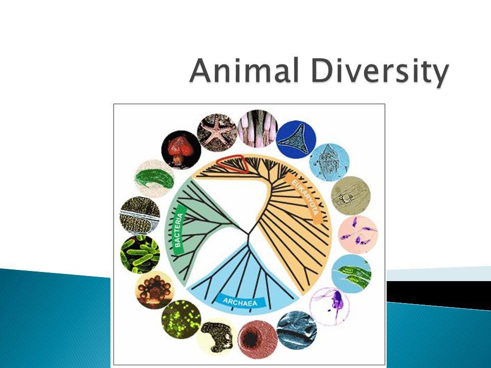 Animal Diversity Red circle denotes animals