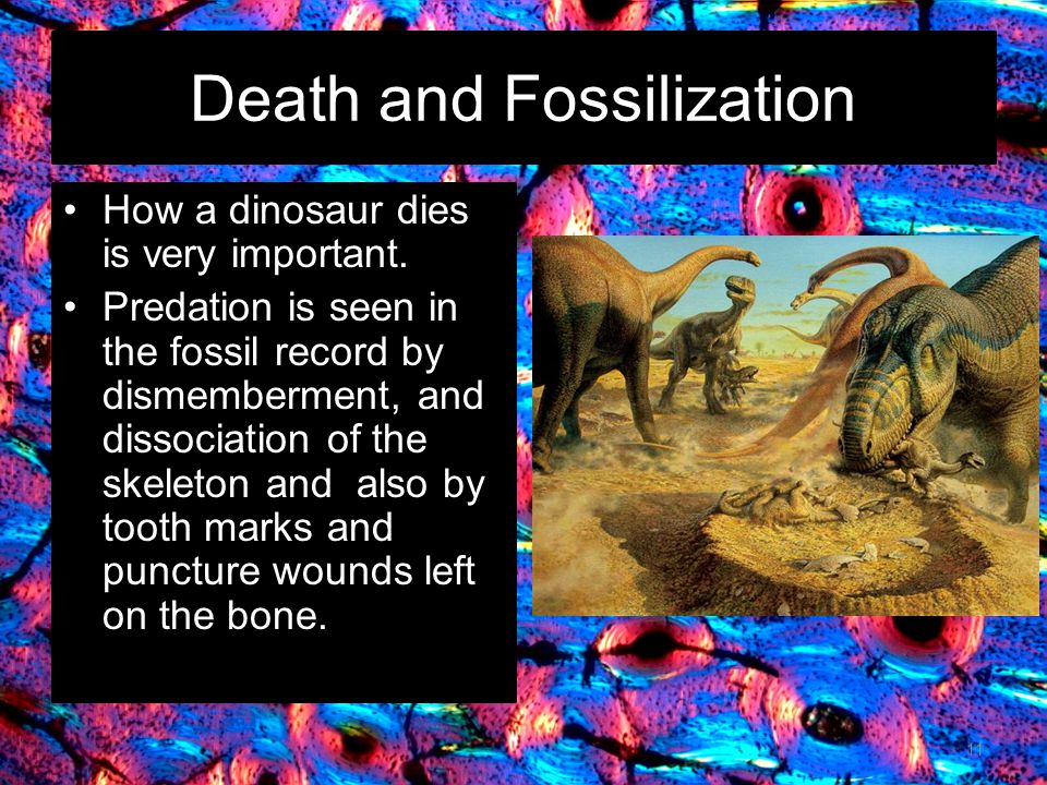 Death and Fossilization