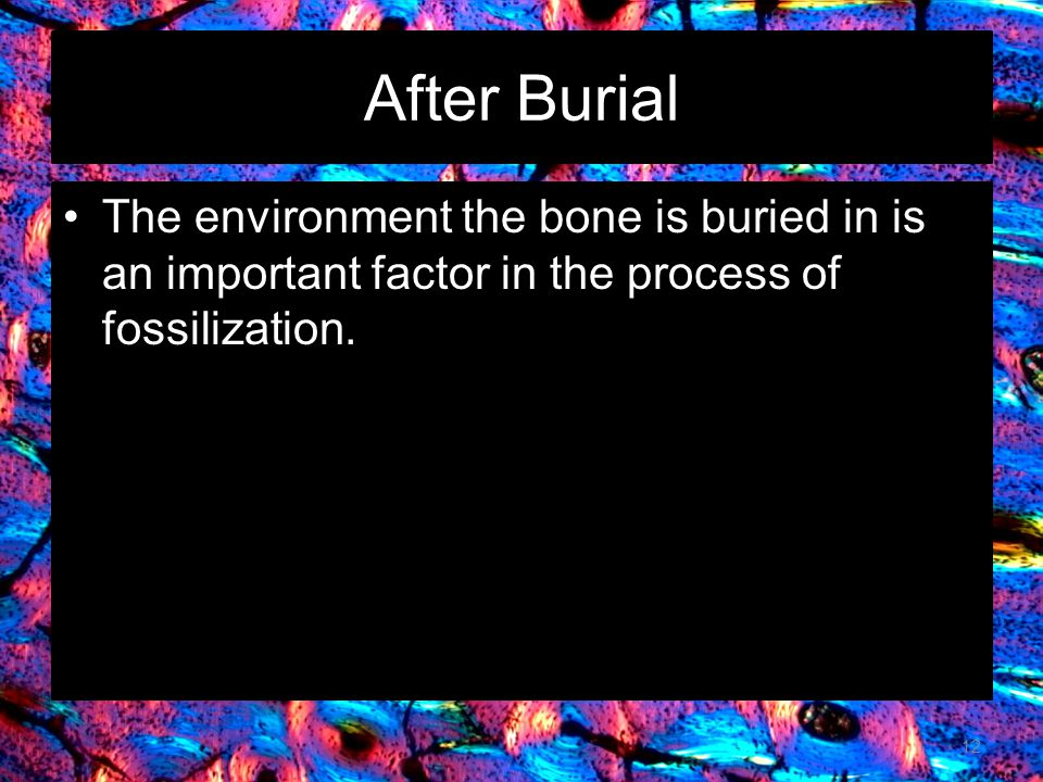 After Burial The environment the bone is buried in is an important factor in the process of fossilization.
