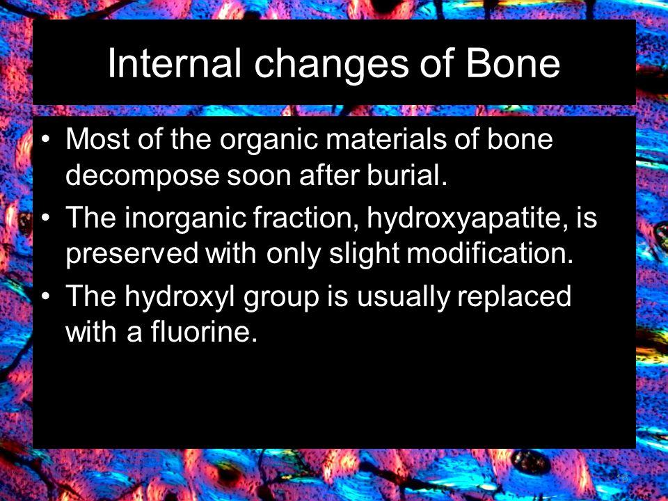 Internal changes of Bone