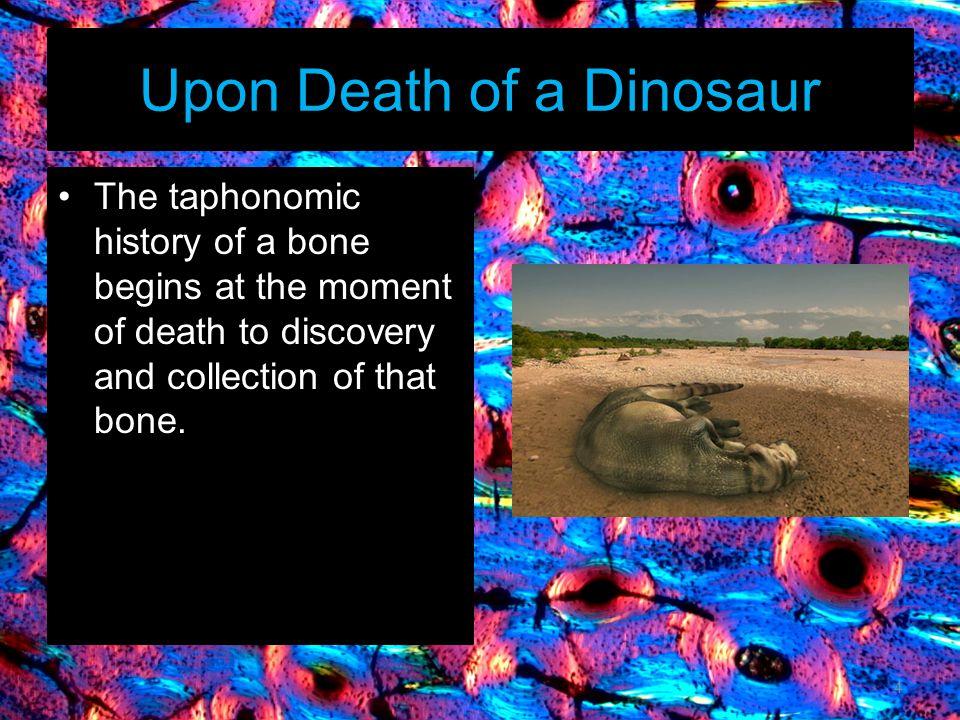 Upon Death of a Dinosaur