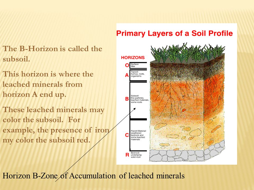 The B-Horizon is called the subsoil.