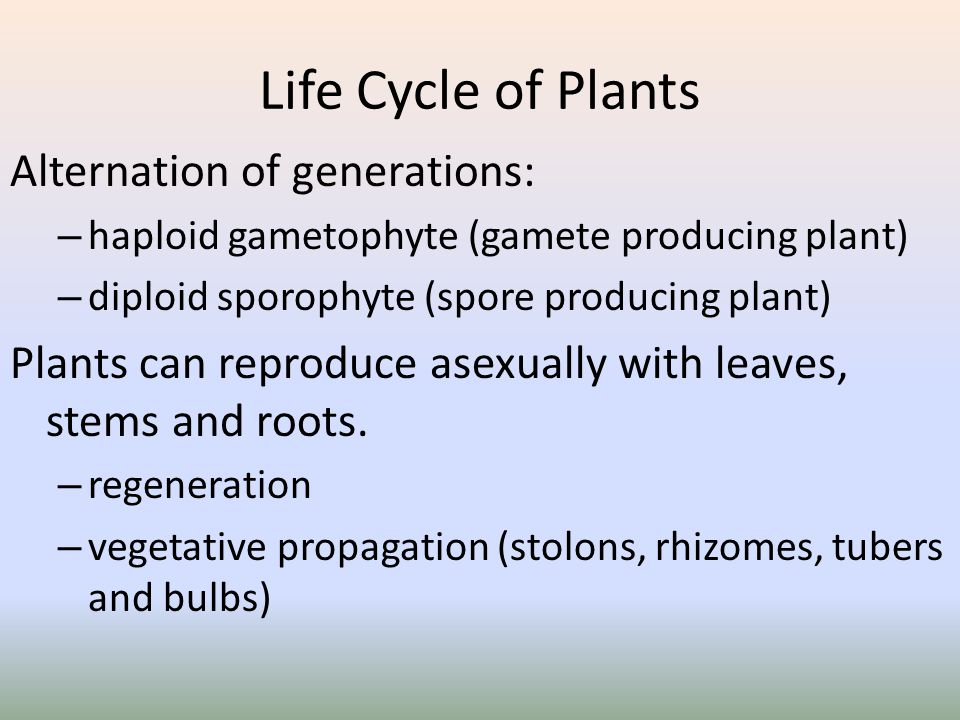 Life Cycle of Plants Alternation of generations: