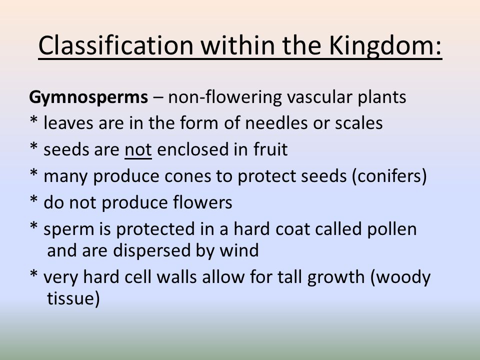 Classification within the Kingdom: