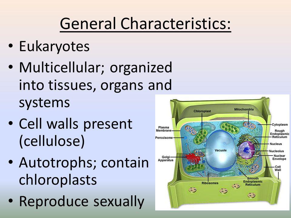 General Characteristics: