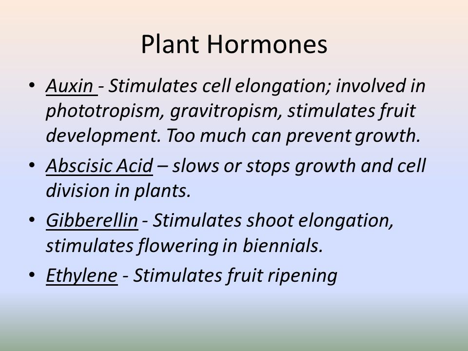 Plant Hormones Auxin - Stimulates cell elongation; involved in phototropism, gravitropism, stimulates fruit development. Too much can prevent growth.