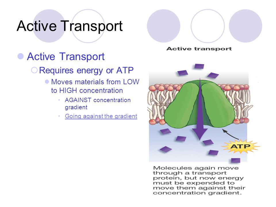 Active Transport Active Transport Requires energy or ATP