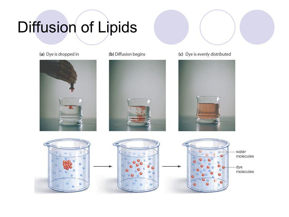 Diffusion of Lipids
