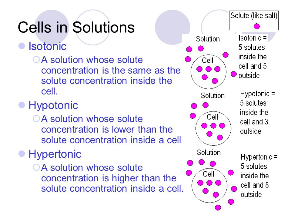 Cells in Solutions Isotonic Hypotonic Hypertonic