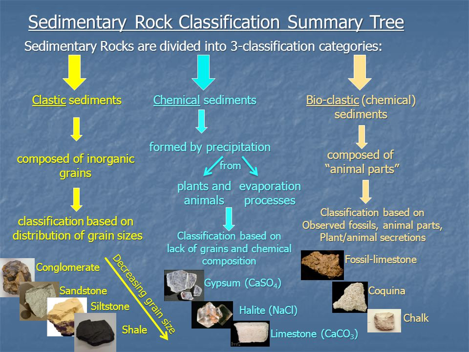 Sedimentary Rock Classification Summary Tree