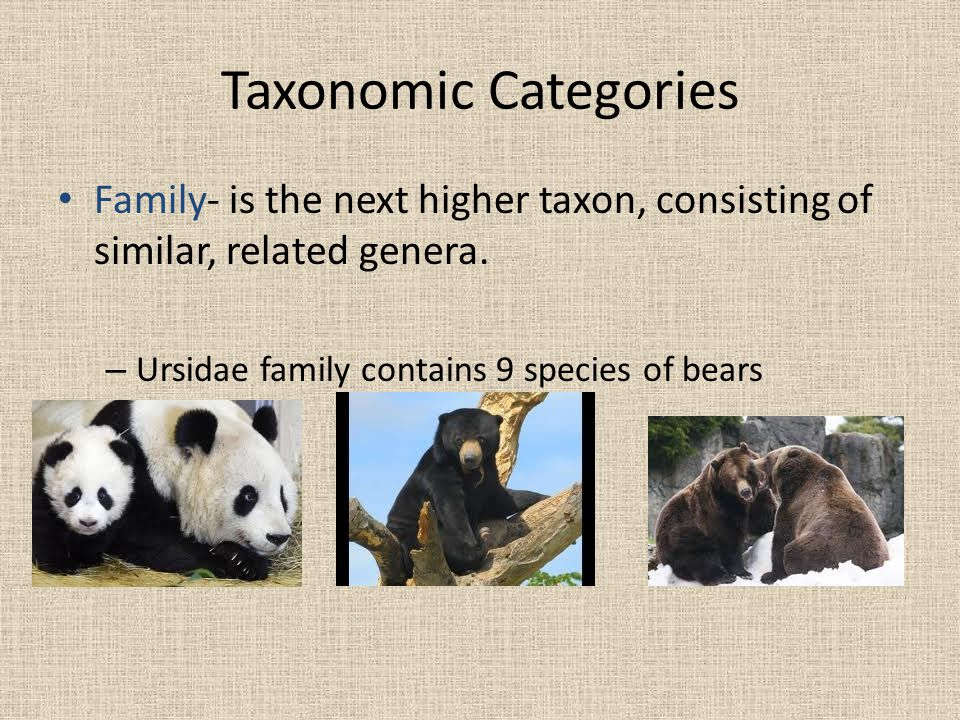 Taxonomic Categories Family- is the next higher taxon, consisting of similar, related genera.