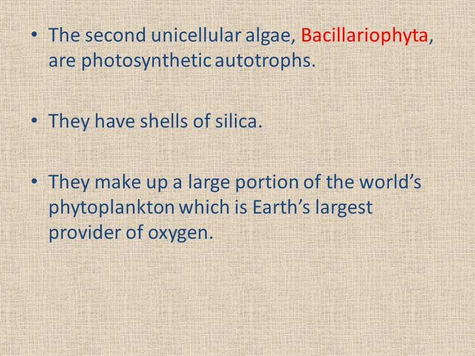 The second unicellular algae, Bacillariophyta, are photosynthetic autotrophs.
