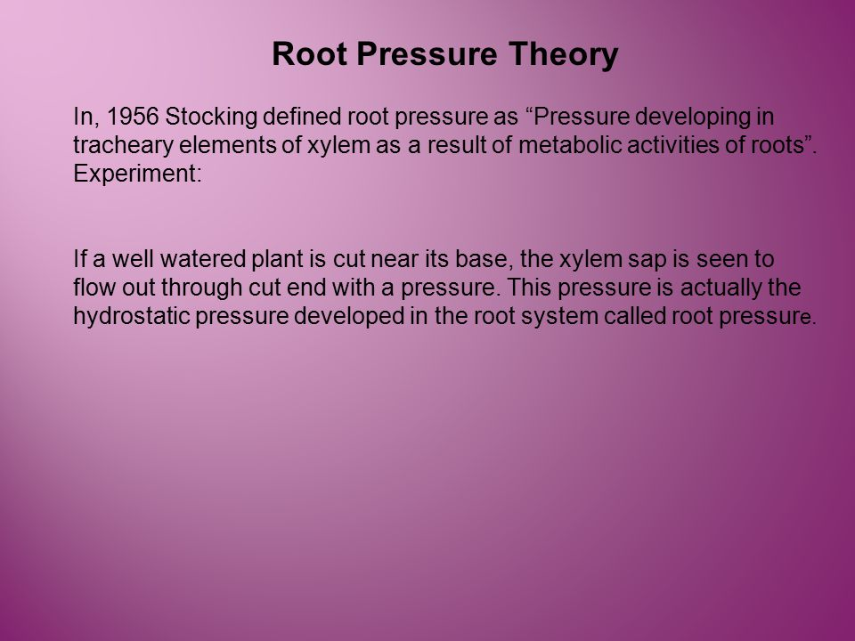 Root Pressure Theory