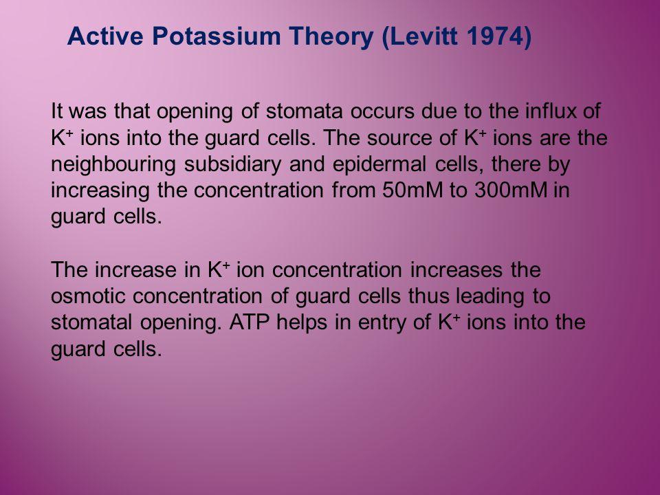 Active Potassium Theory (Levitt 1974)