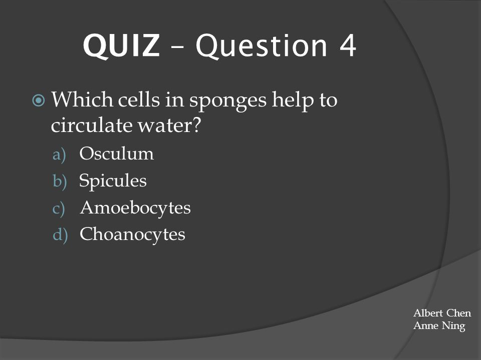 QUIZ – Question 4 Which cells in sponges help to circulate water