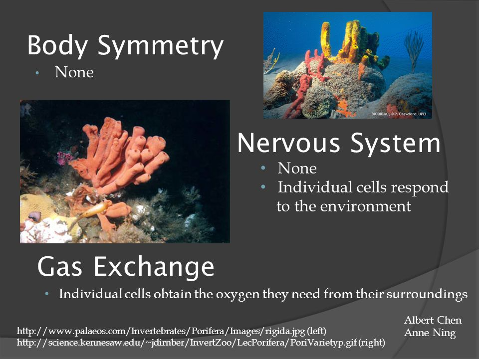Body Symmetry Nervous System Gas Exchange None None