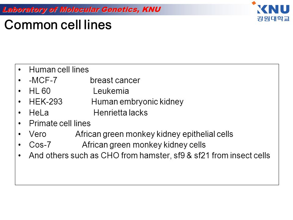 Common cell lines Human cell lines -MCF-7 breast cancer HL 60 Leukemia