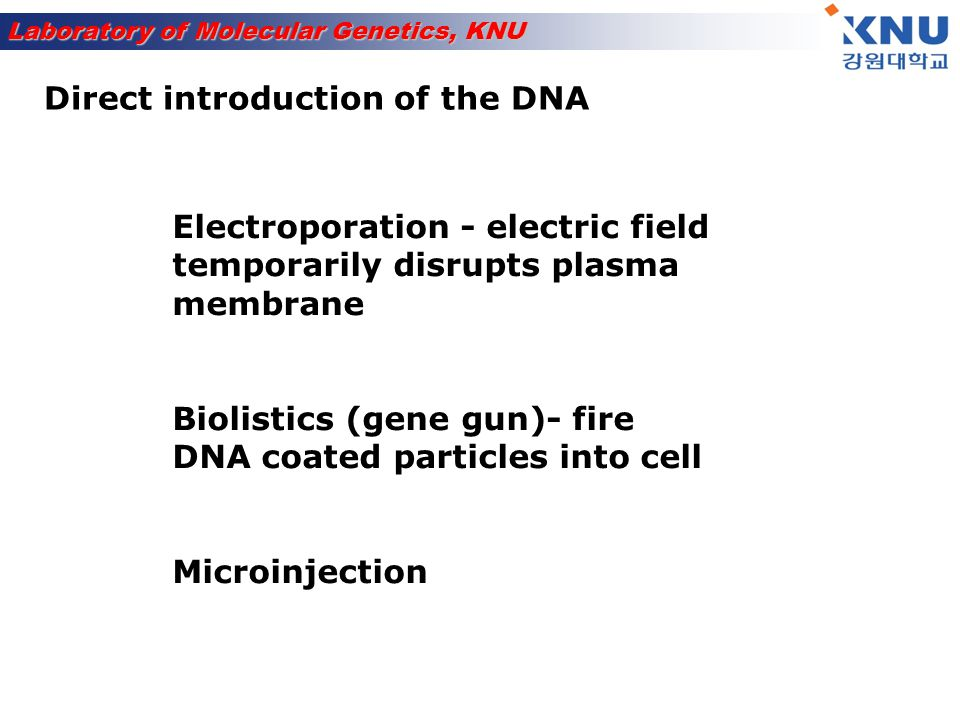 Direct introduction of the DNA