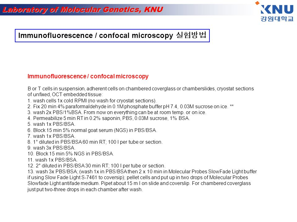 Immunofluorescence / confocal microscopy 실험방법
