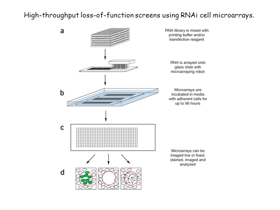 High-throughput loss-of-function screens using RNAi cell microarrays.