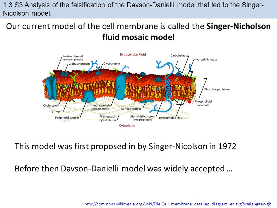 This model was first proposed in by Singer-Nicolson in 1972