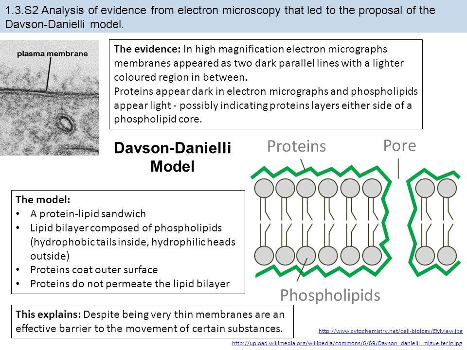 Proteins Pore Phospholipids Davson-Danielli Model