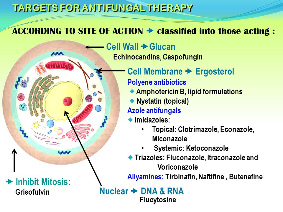 TARGETS FOR ANTIFUNGAL THERAPY