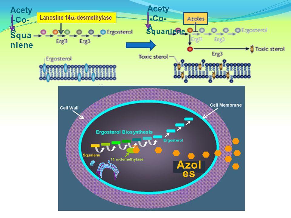 Azoles Acetyl-Co-A Acetyl-Co-A Squanlene Squanlene