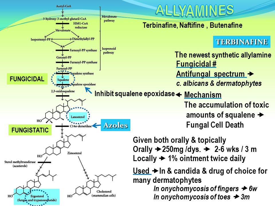 ALLYAMINES The newest synthetic allylamine Fungicidal #