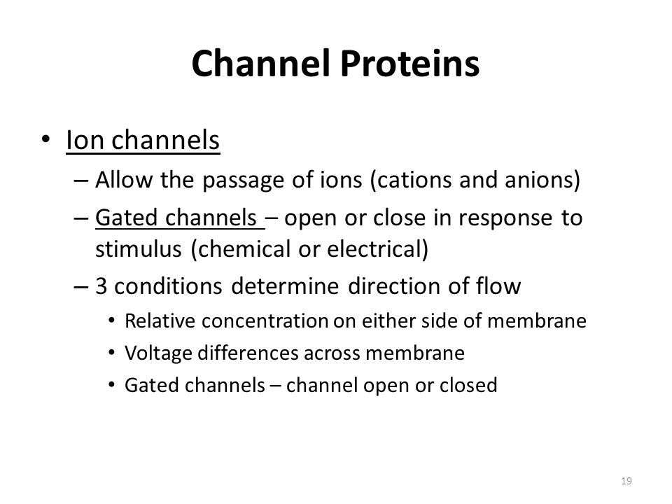 Channel Proteins Ion channels