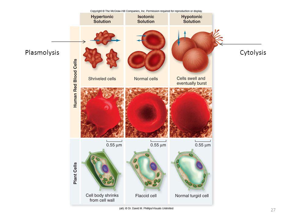 Plasmolysis Cytolysis