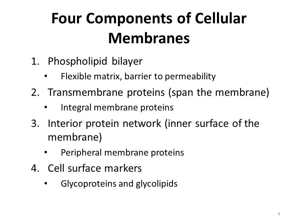 Four Components of Cellular Membranes
