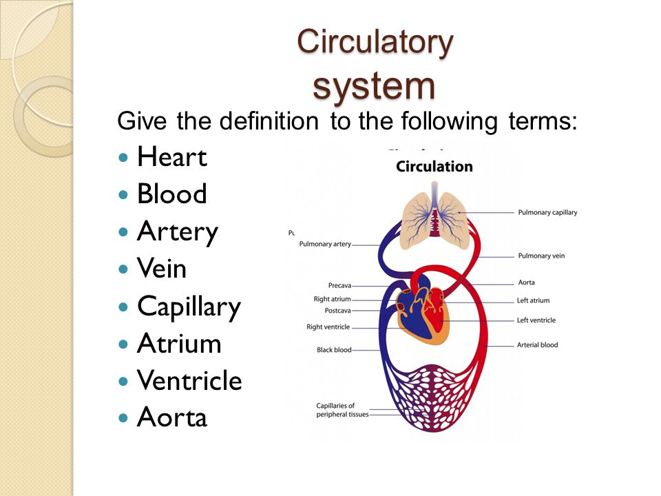 a description of the circulatory system The circulatory system is a vast network of organs and vessels that is responsible for the flow of blood, nutrients, hormones, oxygen and other gases to and from cells.