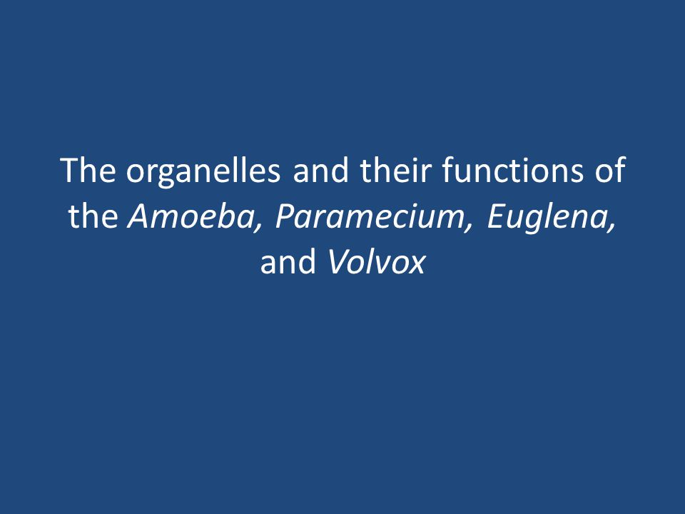 The organelles and their functions of the Amoeba, Paramecium, Euglena, and Volvox