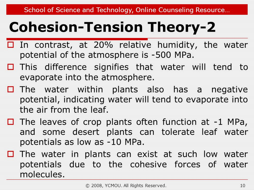 Cohesion-Tension Theory-2