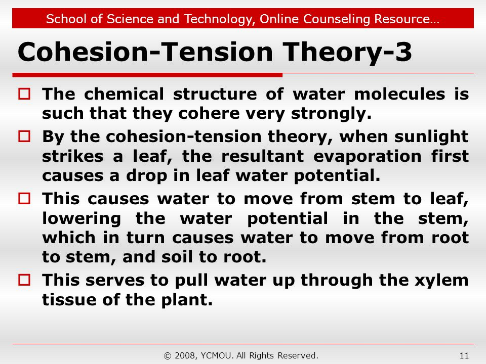 Cohesion-Tension Theory-3
