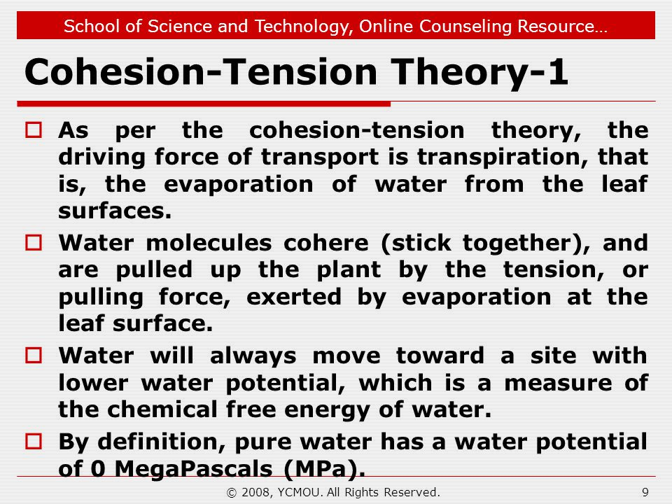 Cohesion-Tension Theory-1