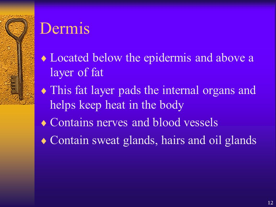 Dermis Located below the epidermis and above a layer of fat