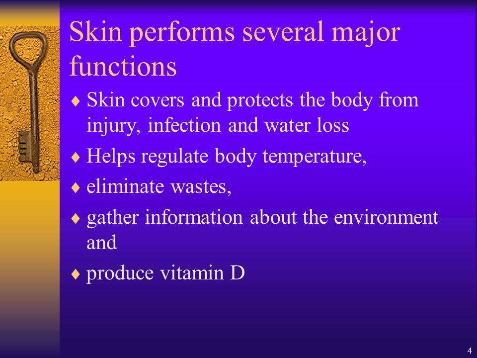 Skin performs several major functions