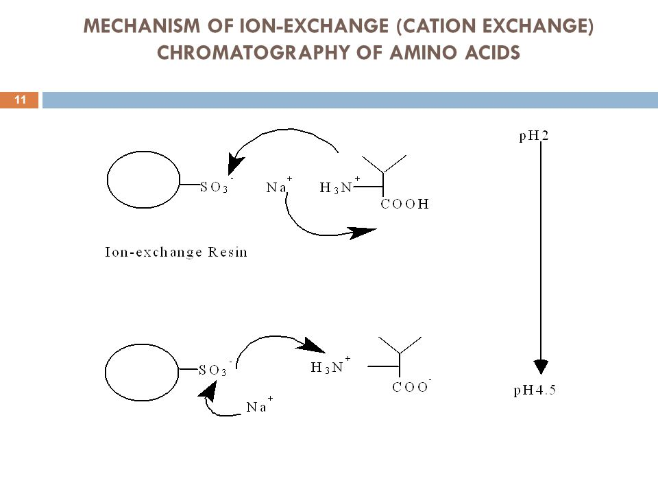 MECHANISM OF ION-EXCHANGE (CATION EXCHANGE) CHROMATOGRAPHY OF AMINO ACIDS