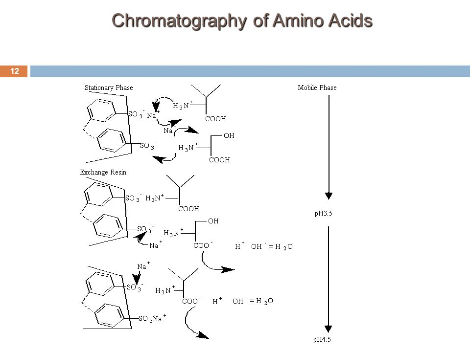Chromatography of Amino Acids