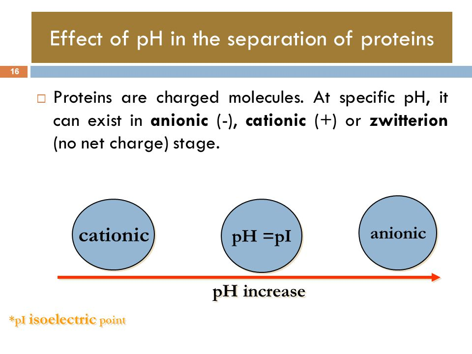 Effect of pH in the separation of proteins