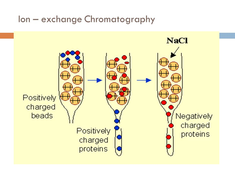 Ion – exchange Chromatography