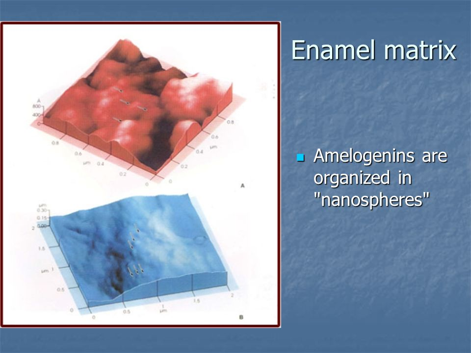Enamel matrix Amelogenins are organized in nanospheres