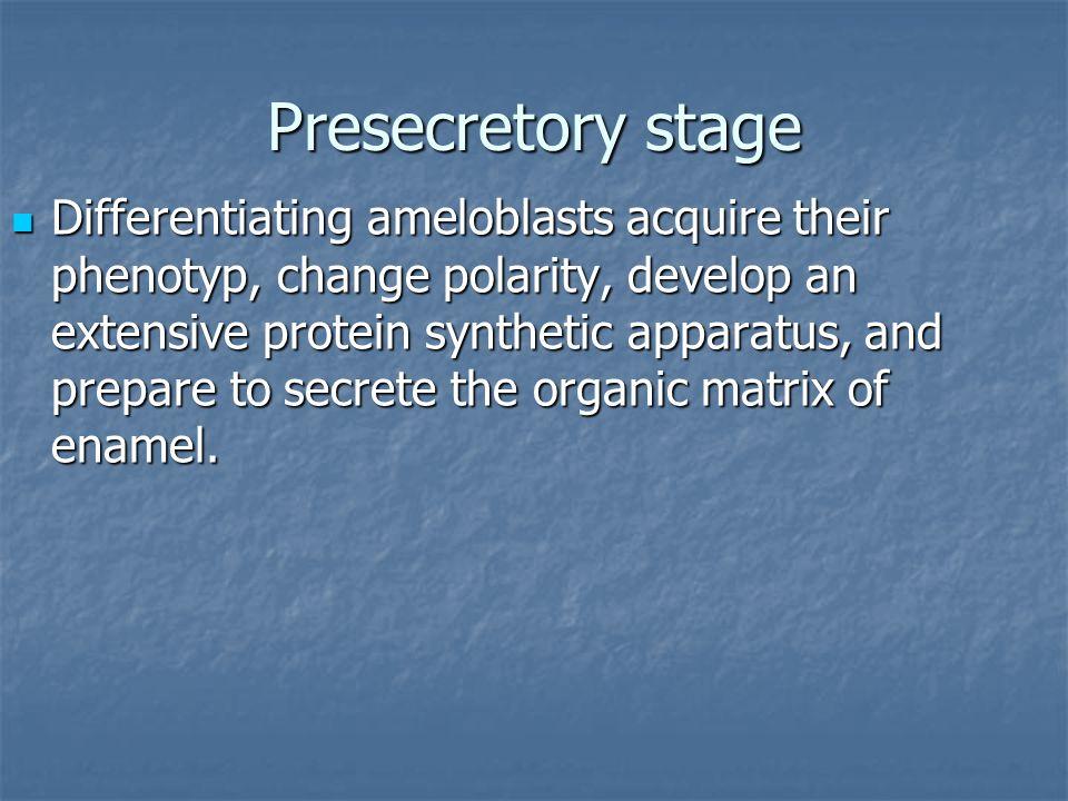 Presecretory stage