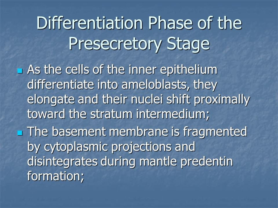 Differentiation Phase of the Presecretory Stage