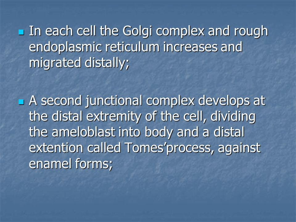 In each cell the Golgi complex and rough endoplasmic reticulum increases and migrated distally;