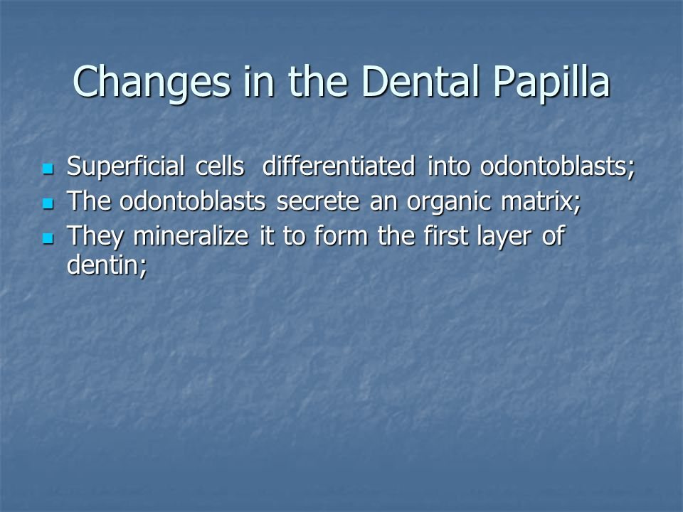 Changes in the Dental Papilla