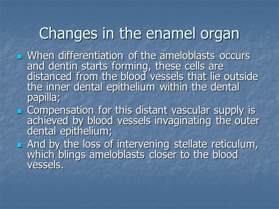Changes in the enamel organ