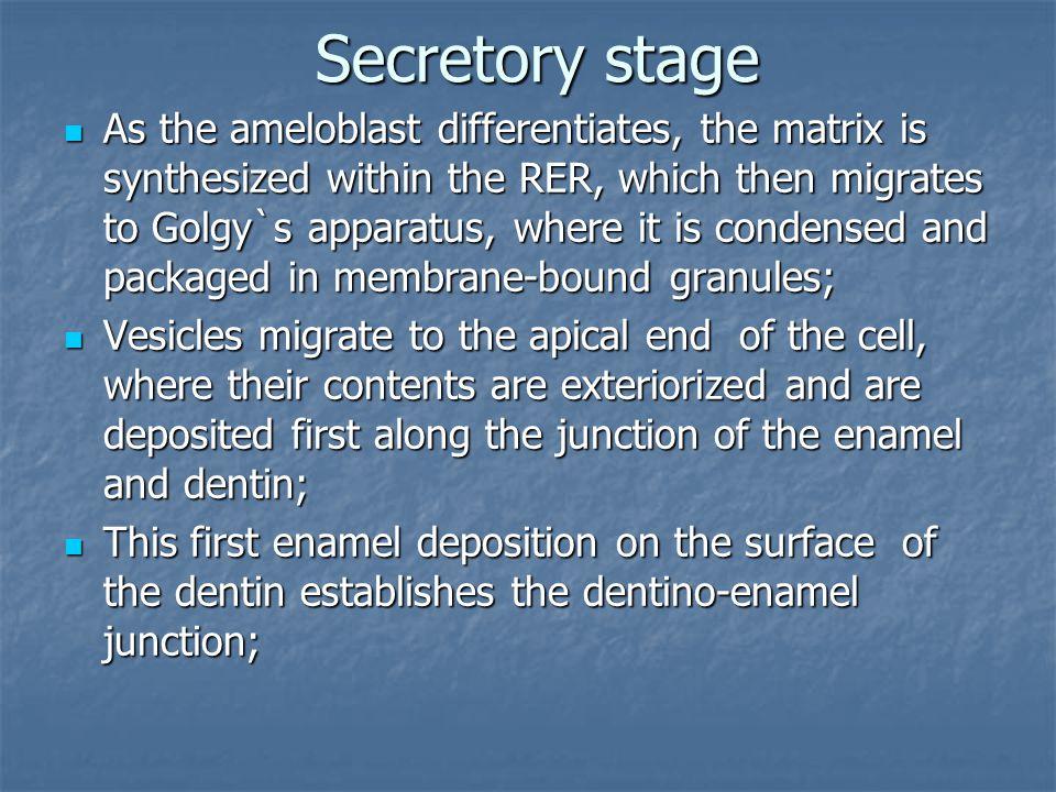 Secretory stage